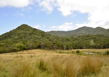 Allan Gale landscape