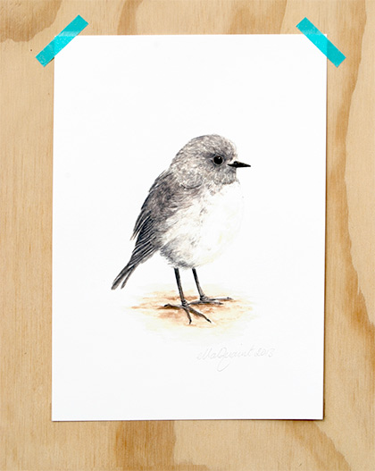 Toutouwai / South Island Robin - Native Manu print by Ellaquaint