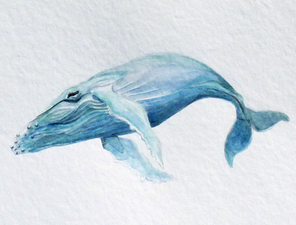 Humpback Whale – an Aquatic Beastie original watercolor by Ella Quaint