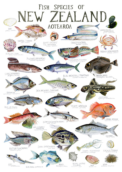 Illustrated Fish Chart by Giselle Draws