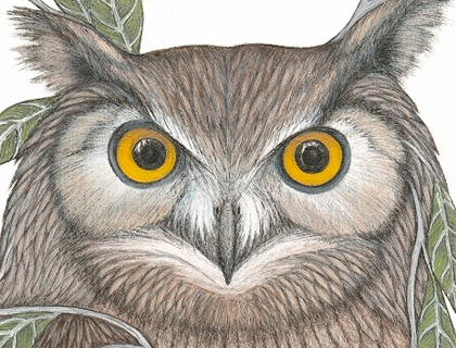 Great Horned Owl - Limited Edition Print by Laura Layton