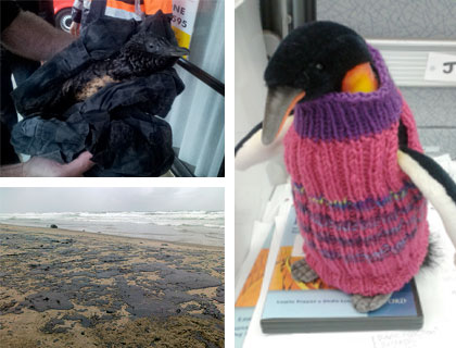 Penguin jumper designed to protect little blue penguins caught in oil from the Rena