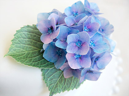 Edible Wafer Paper Hydrangea Flowers by Sweet Whimsy