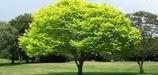 treessetfree