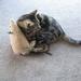 "Cat ""Rat"" Kicker Toy"