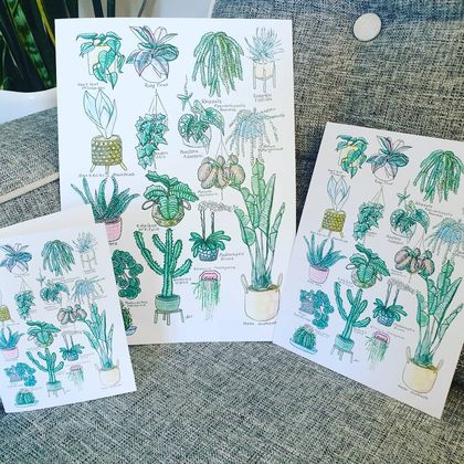 17 Indoor plants A3 PRINT