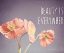 Beauty is Everywhere - 8x12 coral poppies flower photo, inspirational typography - spring summer room decor, wall art, poppies, typography