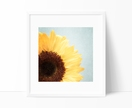 Sunshine - 8x8 square sunflower photograph with a shabby chic pale blue background