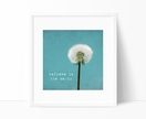 Believe in the Magic - 8x8 dandelion typography photograph with a turquoise background