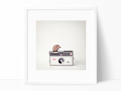The Hedgehog and the Instamatic - quirky photograph for a nursery or childs room