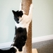 800mm Tall Wooden Cat Scratching Posts