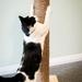 Cat Scratching Posts (800mm Tall)