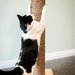 1000mm Tall Cat Scratching Post