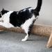 Cat Scratcher (800mm Long)