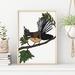 Fantail New Zealand Bird Art Print