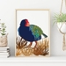 Takahe New Zealand Bird Art Print.