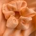 Silk Coral Handmade West Moor Design Scrunchie