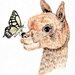 The Alpaca and the Butterfly