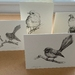 NZ Native Birds , set of four Gift Cards