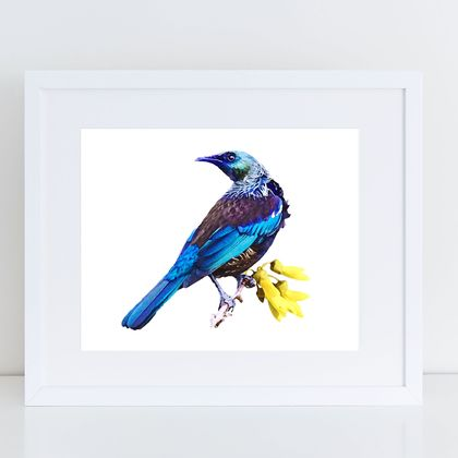 Tui on Kowhai watercolour print