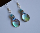 Paua & Silver earrings~ sterling silver hooks