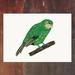 Kakapo - New Zealand Bird A4 Archival Art Print