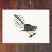 Fantail - Piwakawaka - New Zealand Bird A4 Archival Art Print