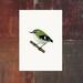 Rifleman - Titipounamu - New Zealand Bird A4 Archival Art Print