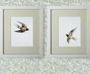 *Birds of a Feather  -   2 glicee prints of your choice