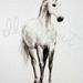 Misty Horse   -  a Grey Beastie print