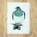 *Kereru -  a fine art giclee print