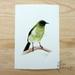 *Korimako /  Bellbird  -  a giclee print