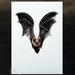 Long Tailed Bat / Pekapeka -  a fine art giclee print A5
