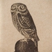 Owl on a Bowler Hat Notebook