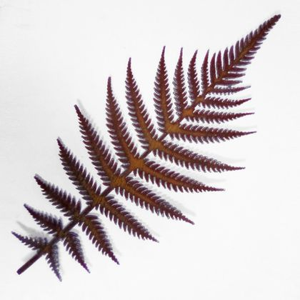 Ironweed FERN - natural rust