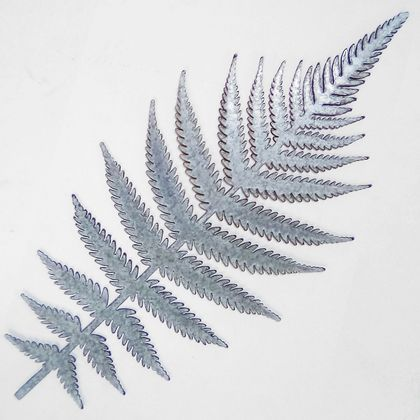 Ironweed FERN