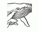 Lino-cut 'Humpback whale, cow & calf'