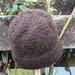 **100% NZ Wool Beanie**