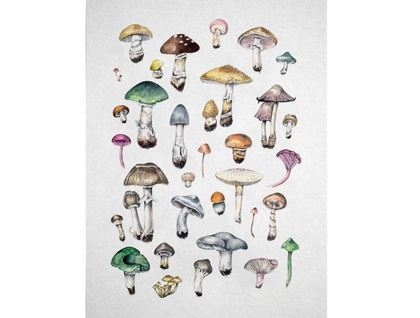 Mushrooms A4 Digital Art Print