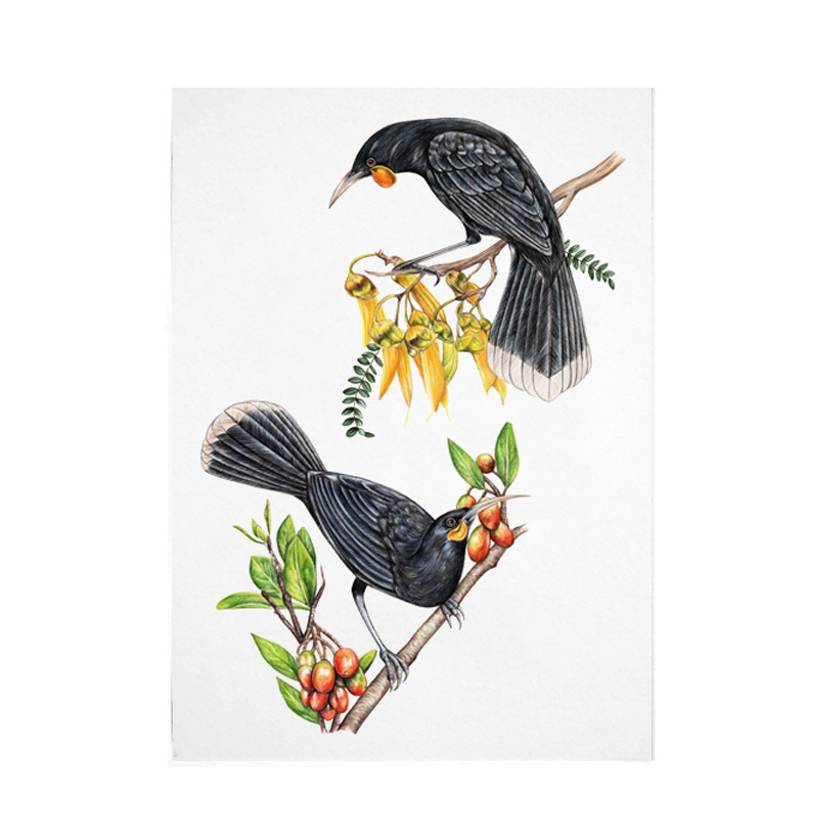 Two Huia A4 Archival Art Print