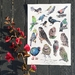 Native Birds of NZ A4 Archival Art Print