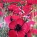 Leather Poppy Brooch