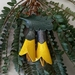 NZ Kowhai Flower Leather Brooch