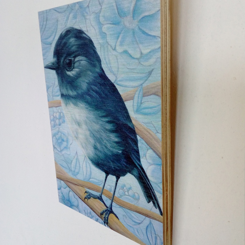 South Island Bush Robin Print on Plywood