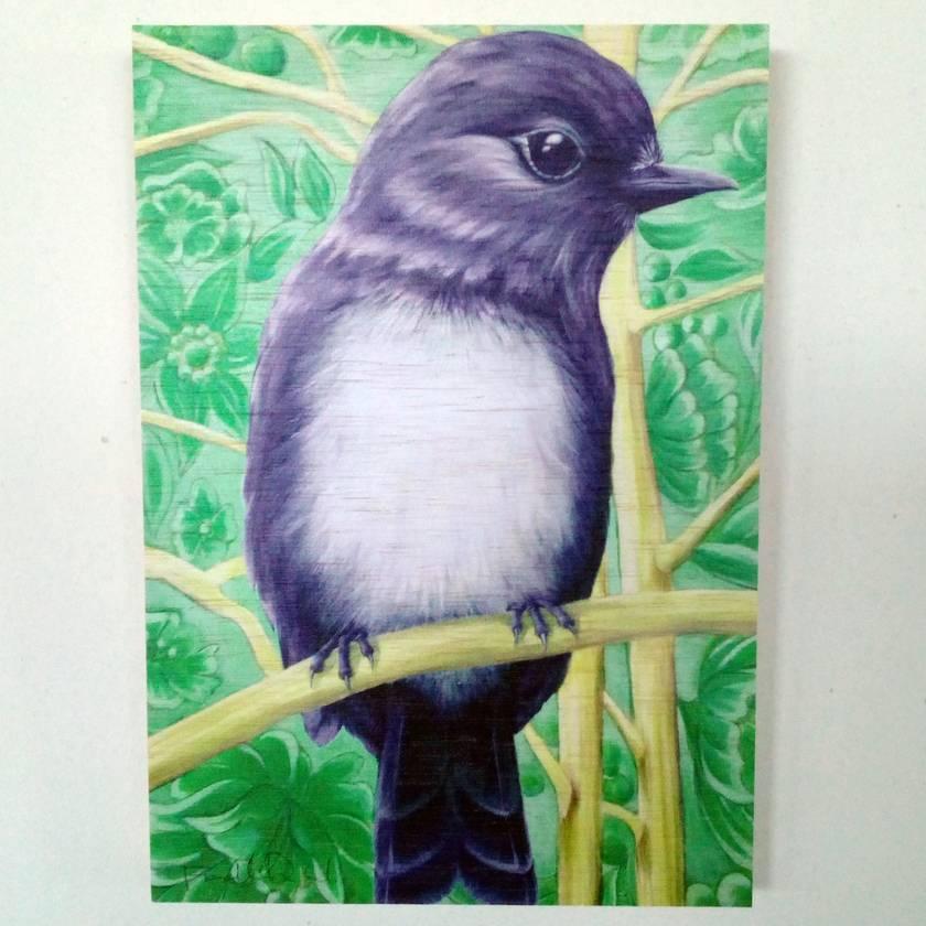 South Island Bush Robin Print on Plywood