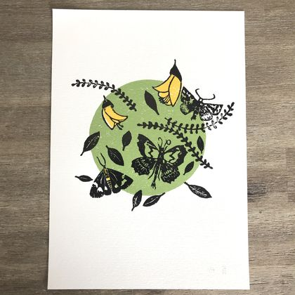 Moths. Woodcut print.