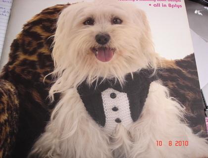 Tuxedo-style hand knitted dog jacket