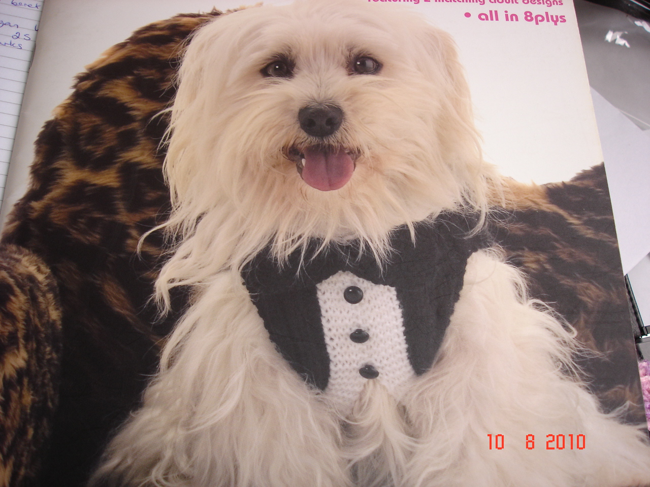 Knitting Pattern For Dogs Tuxedo : Tuxedo-style hand knitted dog jacket Felt