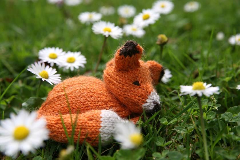 Fox in a Box Knitting Kit