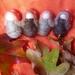 Four  NZ wool toadstool children - Waldorf inspired - Autumn tones